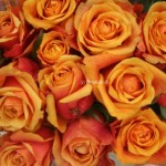Friday Flowers- A Bunch of Roses!