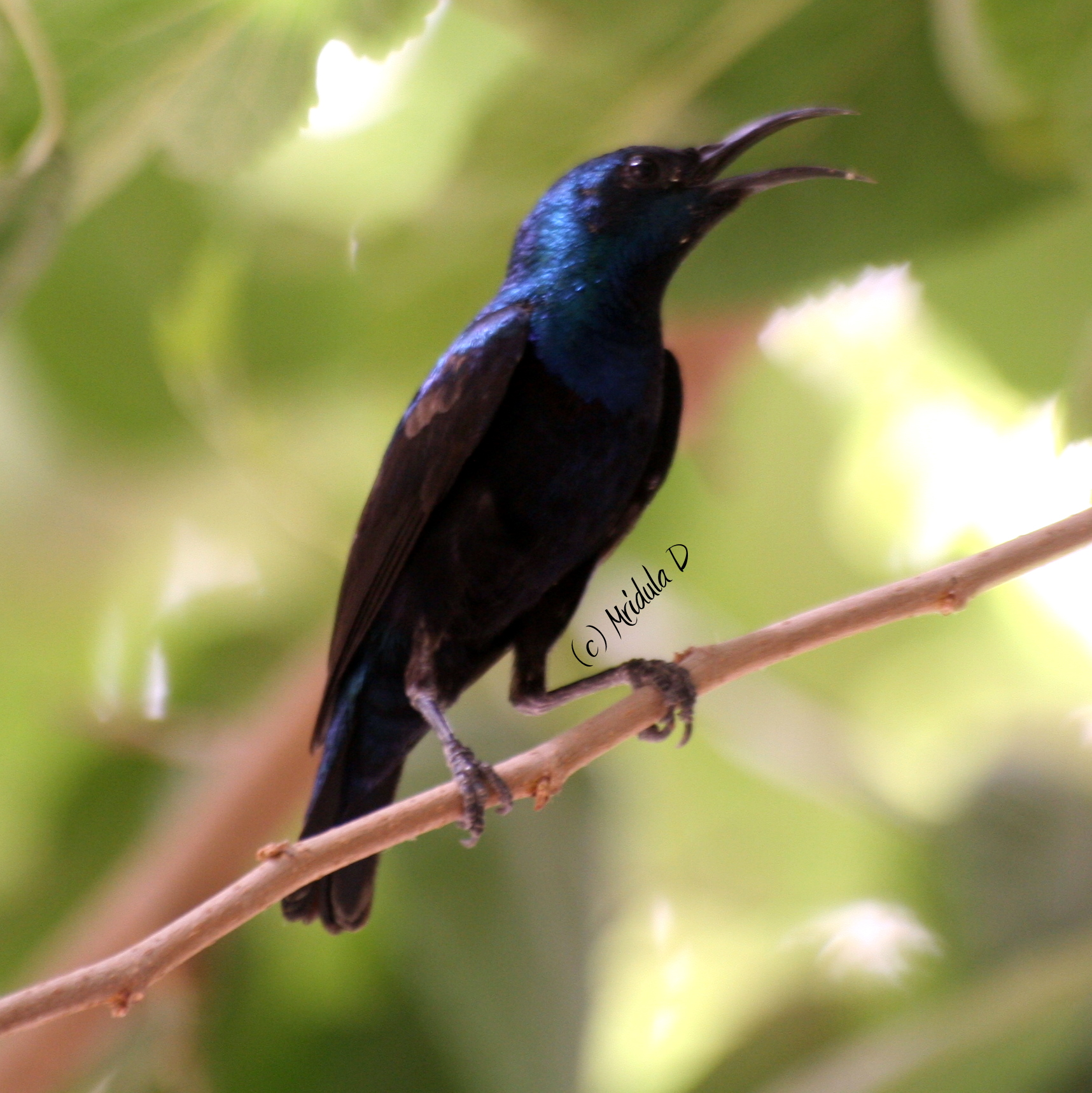 Birds Sunbird: Travel Tales From India And Abroad