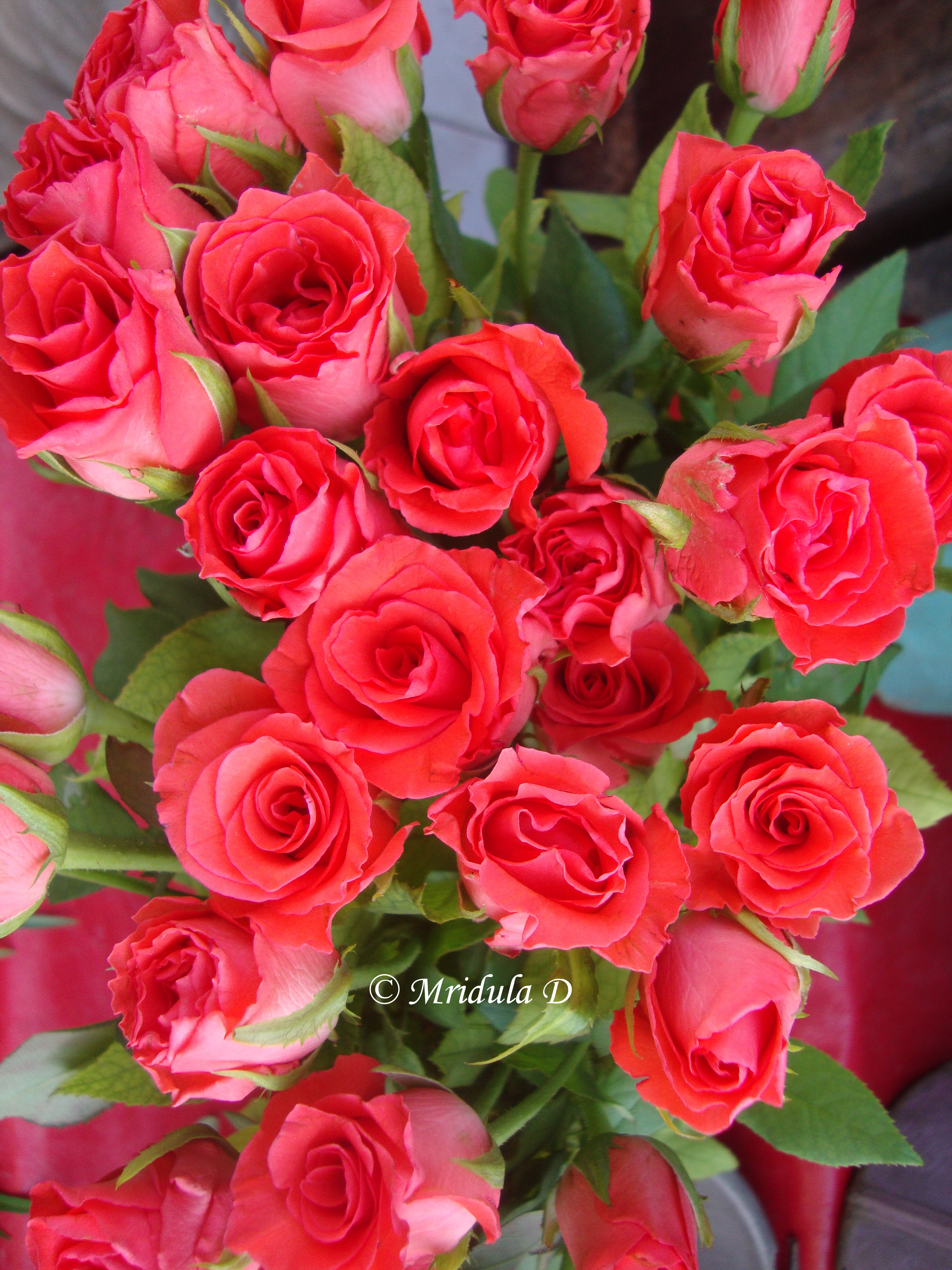 Friday Flowers A Bunch Of Pink Roses From The Pink City Travel