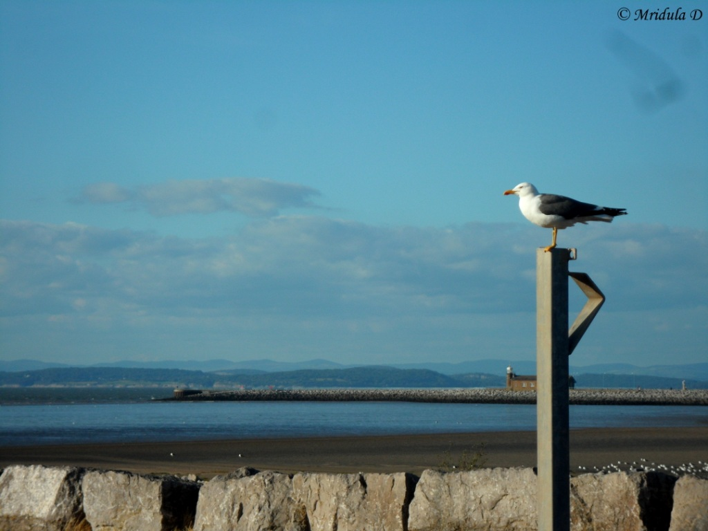 Seagull at Morecambe, Lancaster, UK