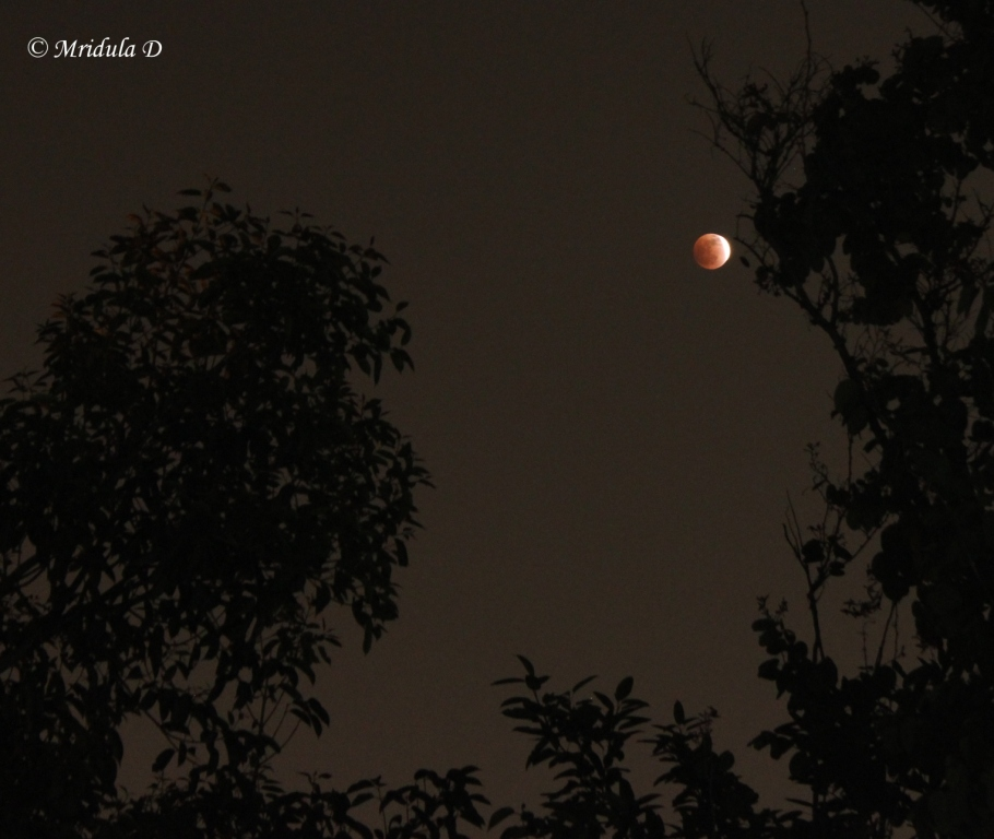 Lunar Eclipse, December 10, 2011