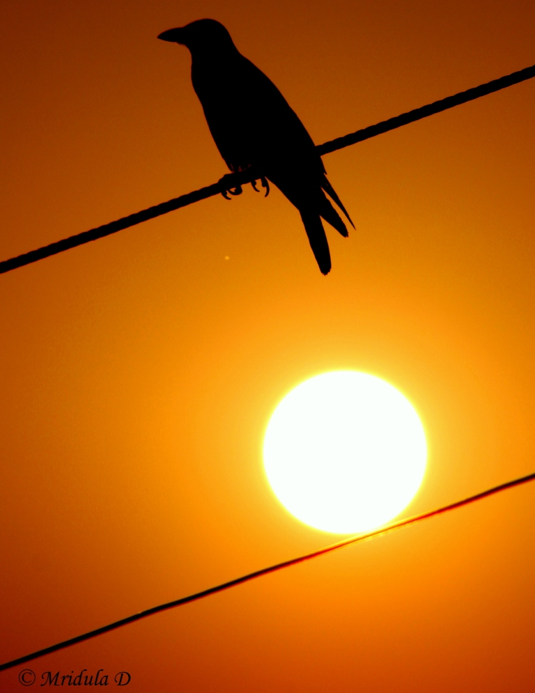The Crow and the Sun
