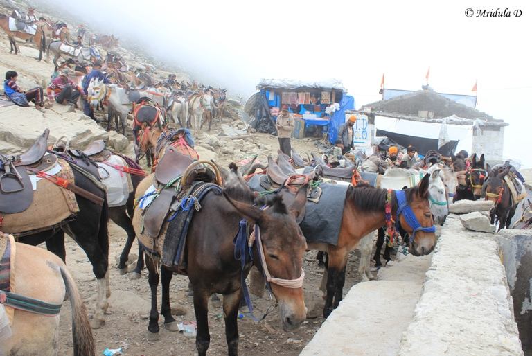 The Horses at Hemkunt Sahib