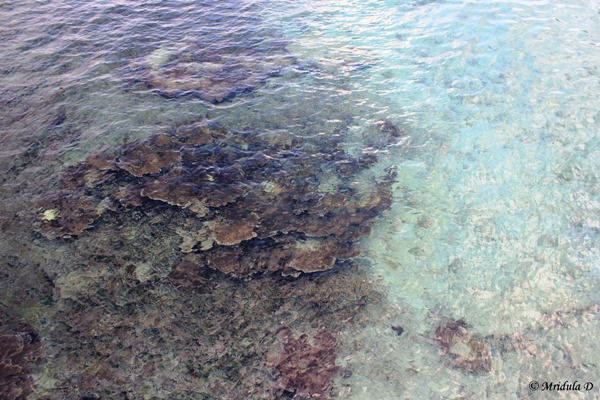 Corals Right off the Beach, Redang Island, Malaysia
