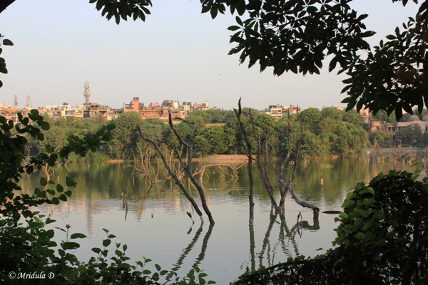 A View of Hauz Khas by from the Lake, Delhi