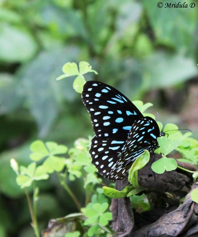 A Butterfly on the Way, Annapurna Circuit Trek Nepal