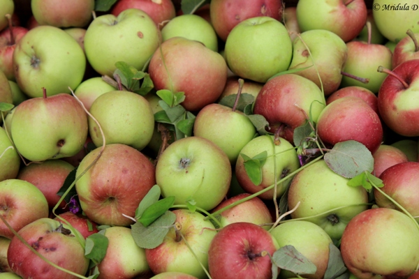 Apples at Dhanachuli Village, Uttarakhand
