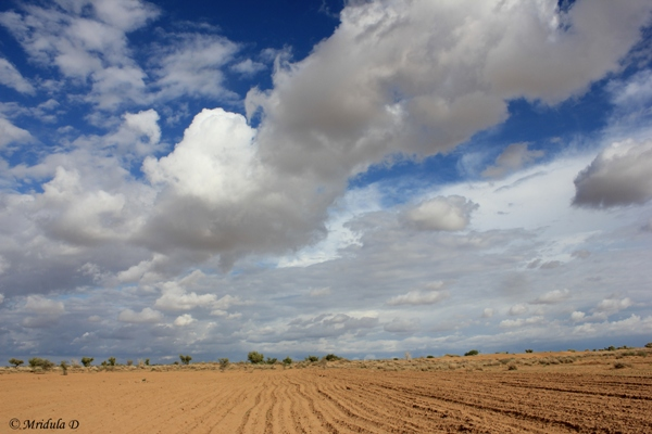 A Ploughed Filed, Jaisalmer, Rajasthan
