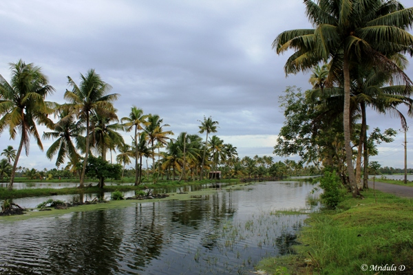 The Cycling Route, Kerala Backwaters