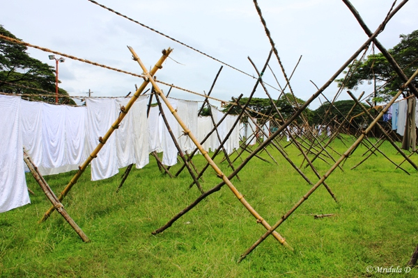 The Local Dhobi Ghat, Fort Kochi