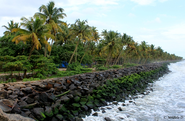 The Shore near Chettanam Fishing Harbour, Kerala