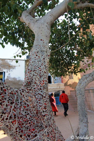 The Wishing Tree, Koteshwar, Gujarat
