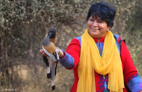 Feeding Treepies at Sariska