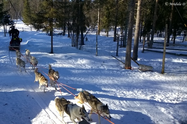 The Husky Dog Sledge Ride