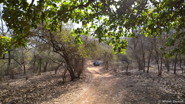 Inside the Ranthambore National Park, Rajasthan
