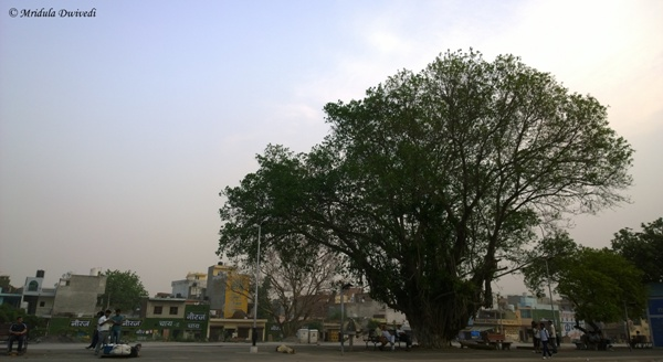 Banyan Tree, Gurgaon Railway Station