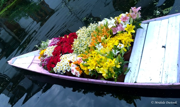 A Shikara Full of Flowers