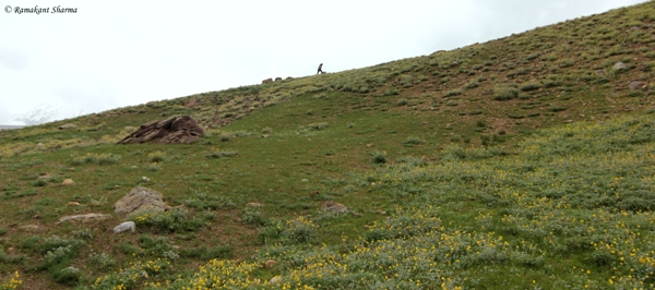 Trudging along the Final Slope