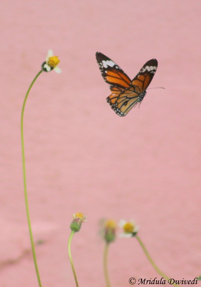 A Butterfly at Bang Pu Village
