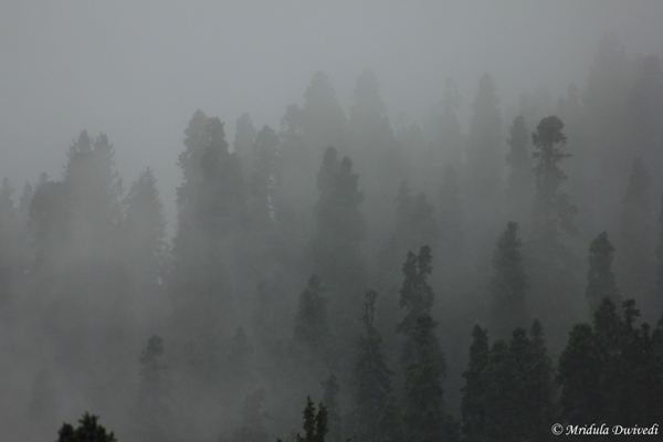 Mist at Gulmarg, Kashmir