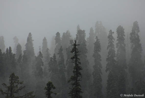 More Mist at Gulmarg, Kashmir
