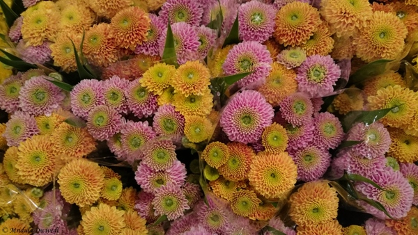 A Pretty Bunch of Chrysanthemums