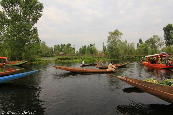 floating-vegetable-market-dal-lake