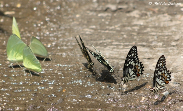butterfly-on-ground