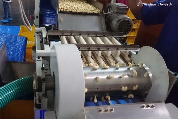 machine-sorting-cashewnuts