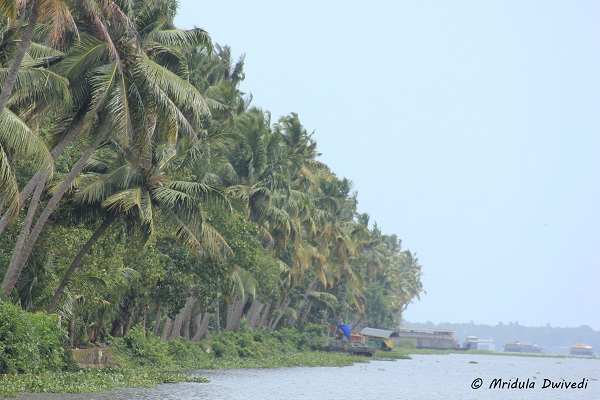 backwaters-kerala