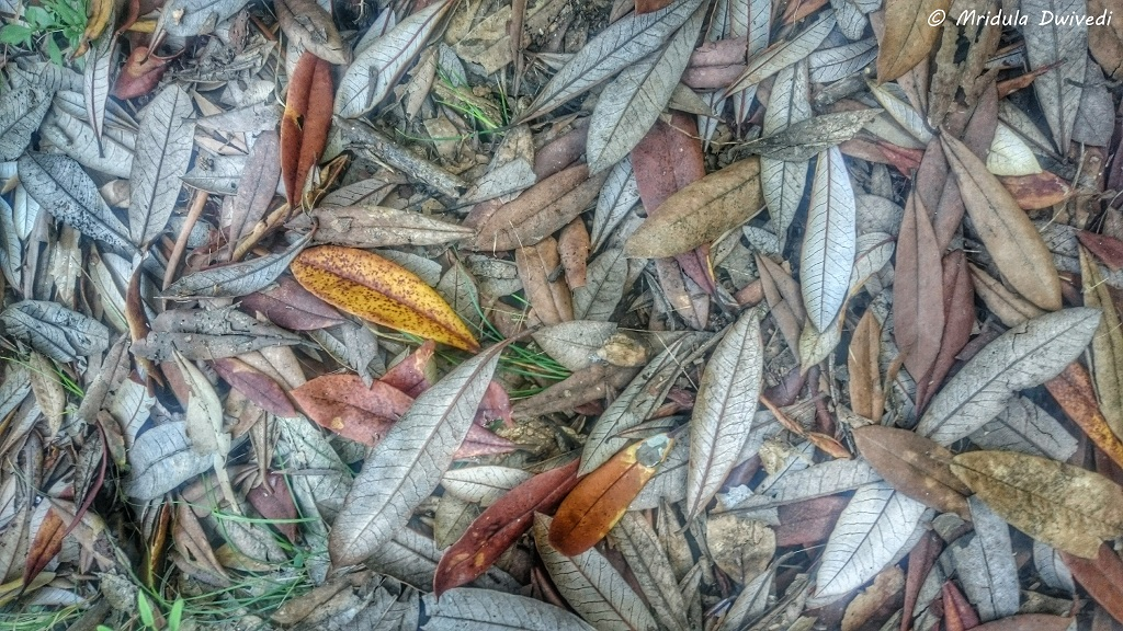 fallen-leaves-mussoorie