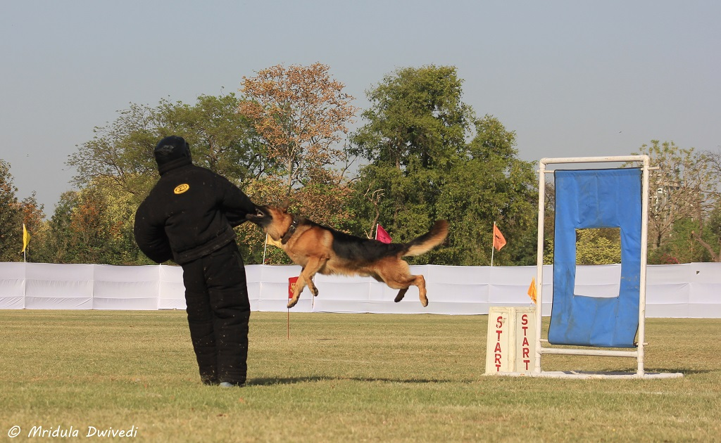 dogs-indian-army