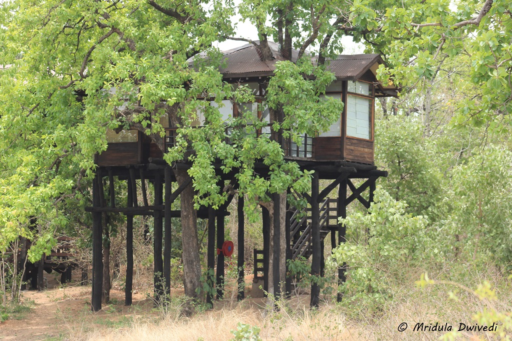 pench-tree-lodge