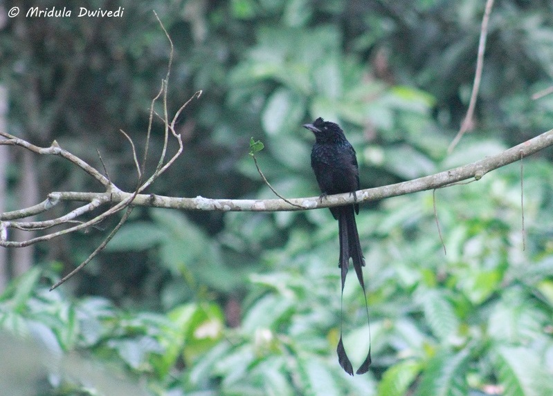 birds-pepper-trail-wayanad