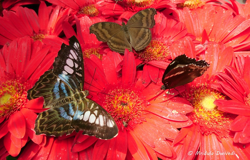 butterfly-garden-changi-airport