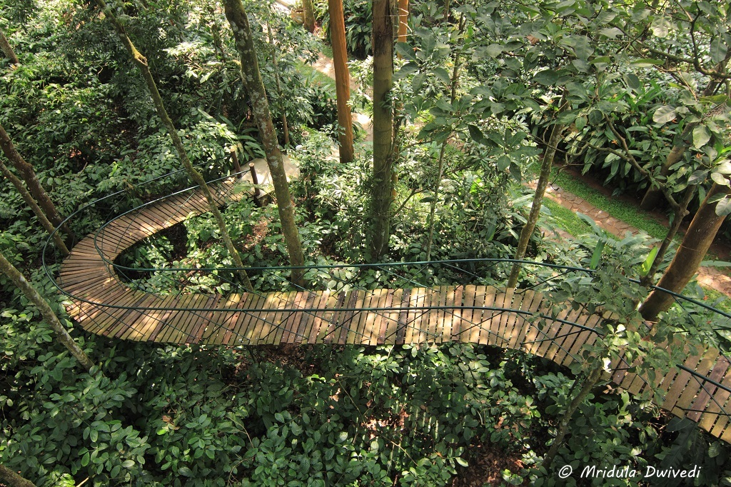 ramp-tree-house-wayanad