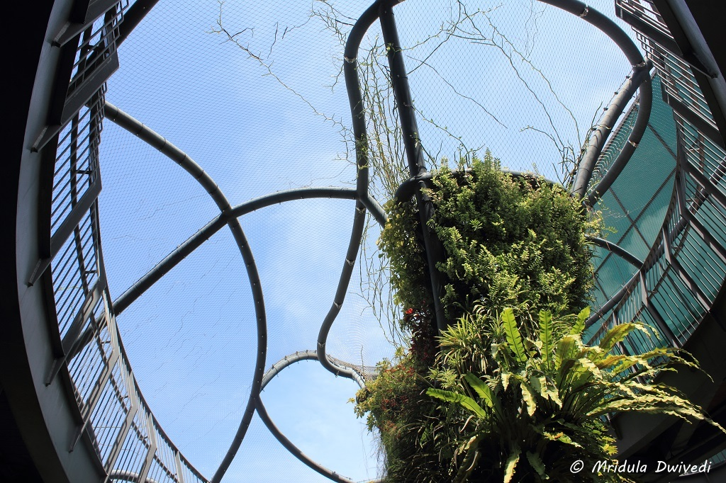 sculptural-garden-t1-changi