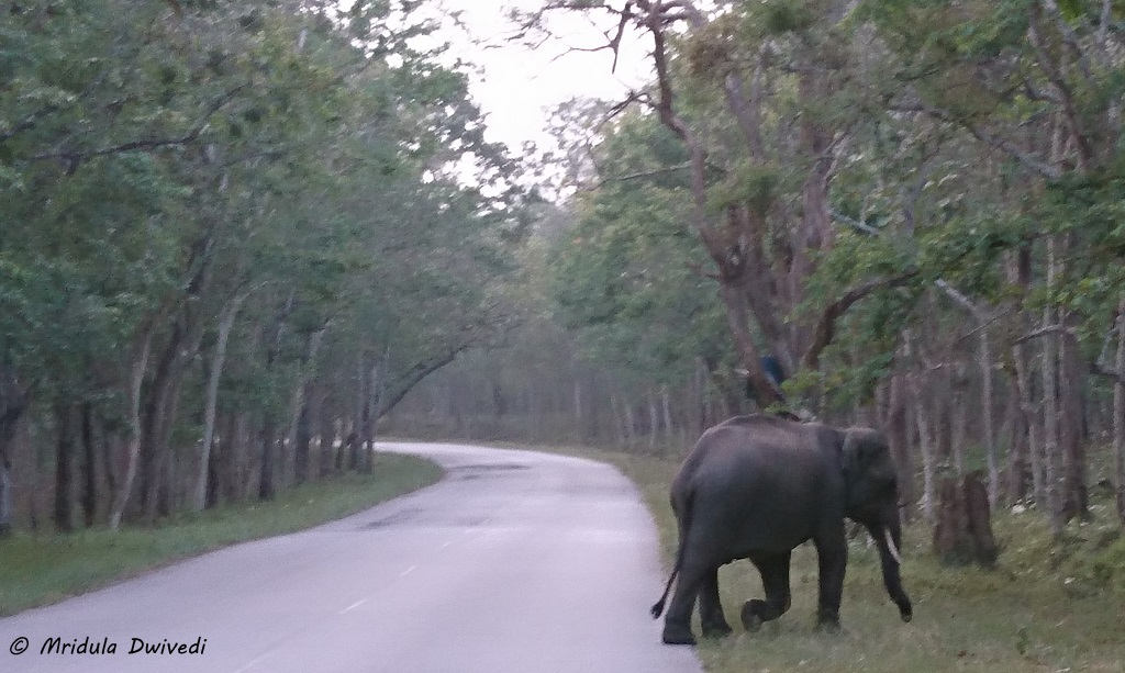 elephants-wayanad