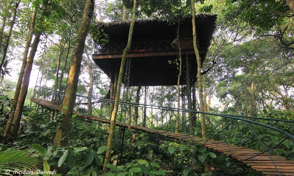 tree-house-wayanad