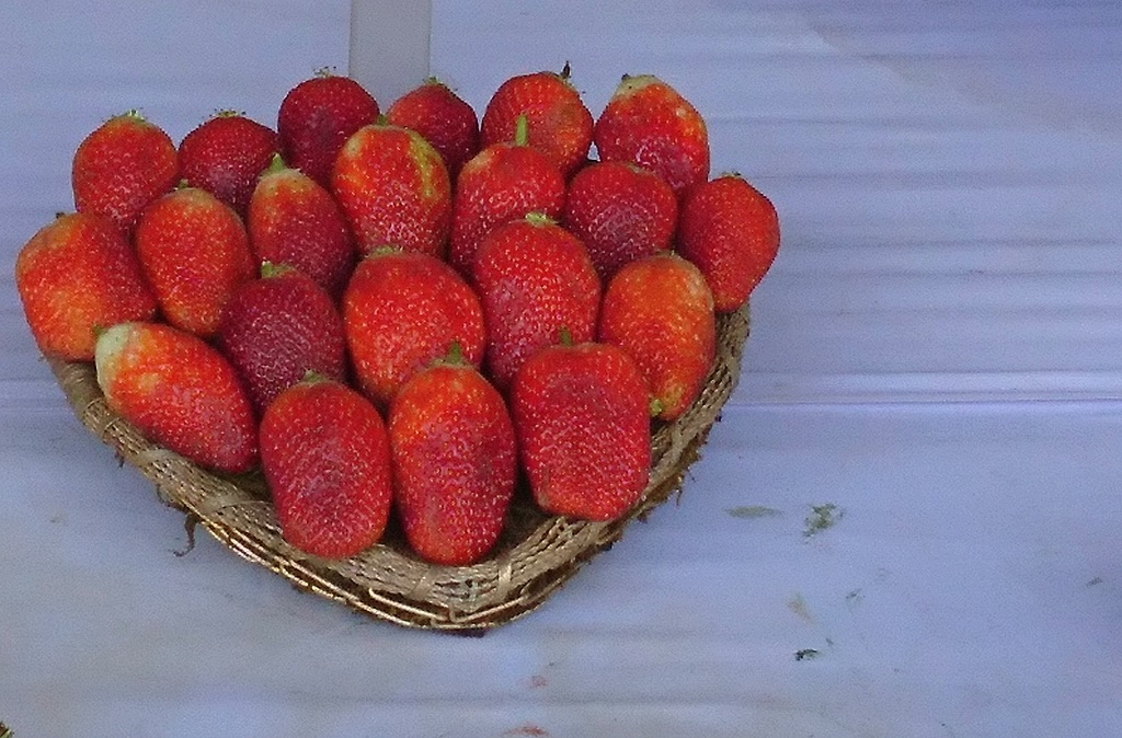 strawberries-mughal-gardens-delhi