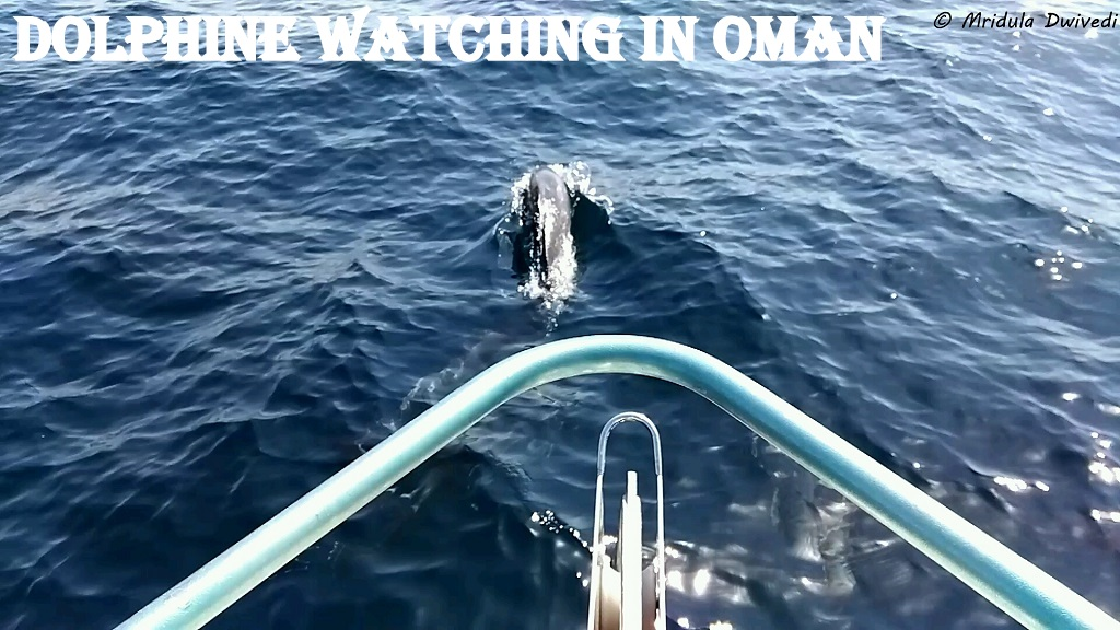 dolphin-watching-oman