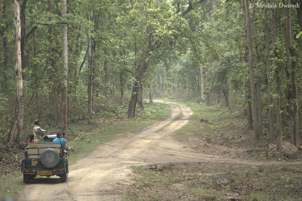 jungle-safari-india