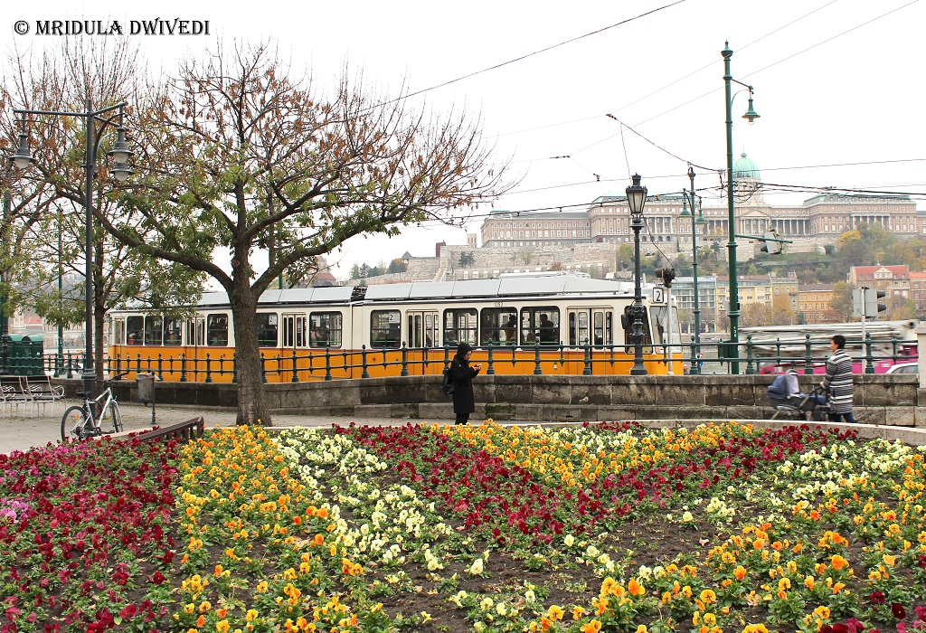 trams-budapest